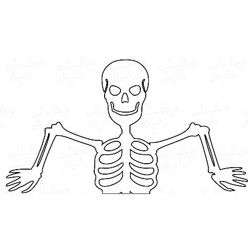 scheletro mezzo busto
